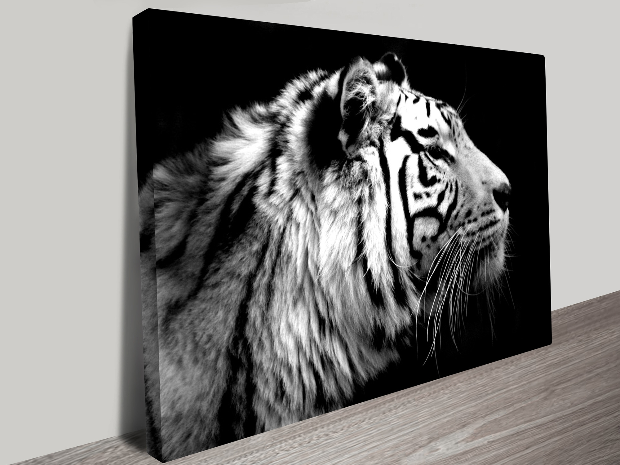 Tiger Black & White Photo Canvas Print Darwin Au For Current Black And White Photography Canvas Wall Art (Gallery 6 of 15)