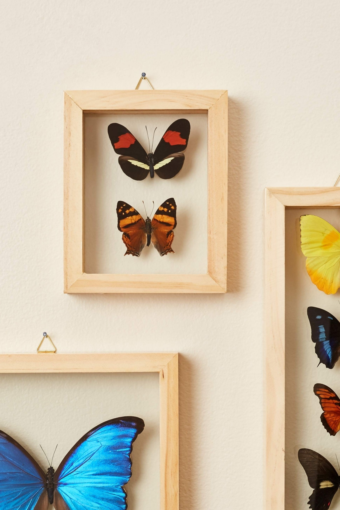 Well Liked Earthbound Canvas Wall Art Inside Search Results For: 'butterflies' – Earthbound Trading Co (View 15 of 15)