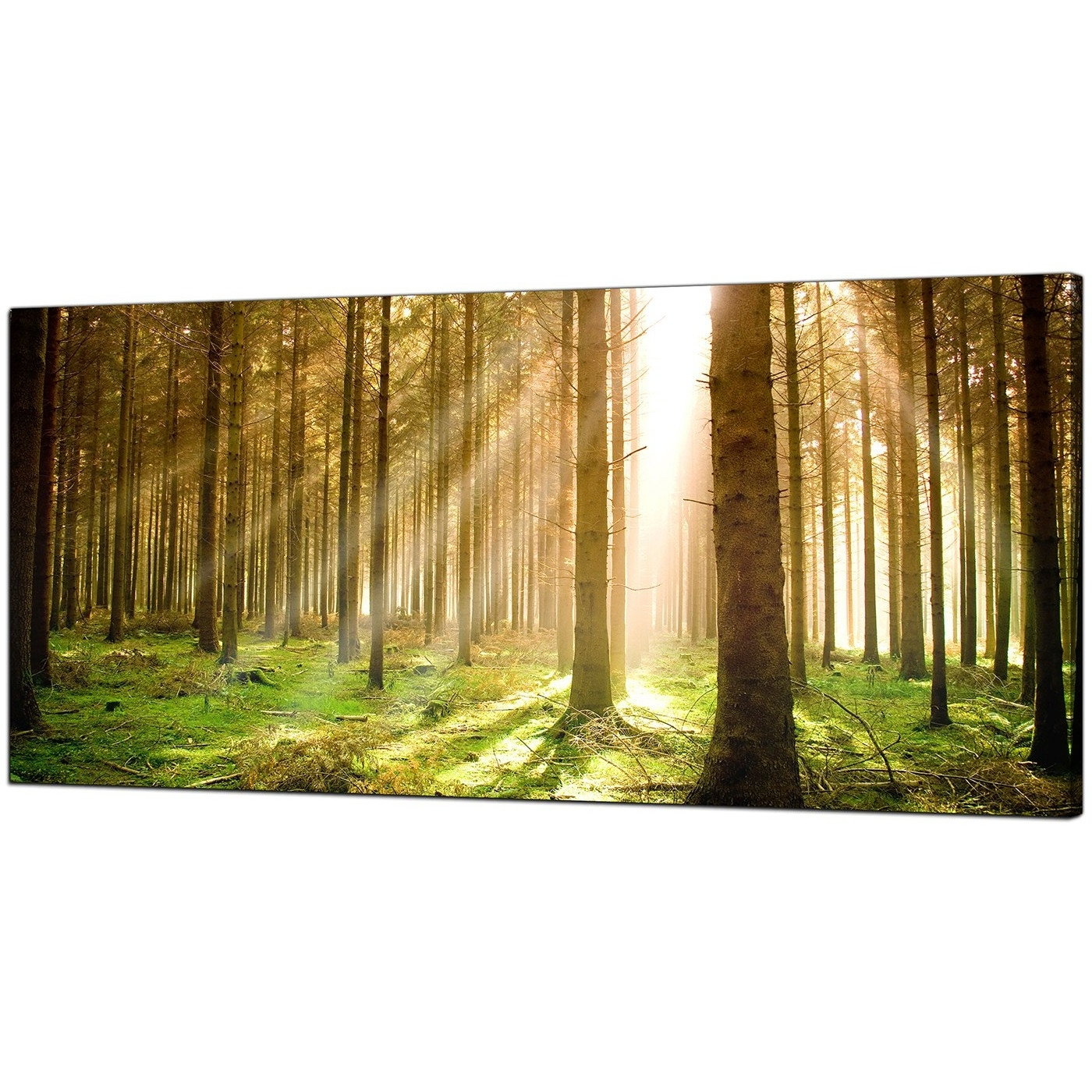 Well Liked Modern Canvas Prints Of Forest Trees For Your Dining Room With Canvas Wall Art Of Trees (View 15 of 15)