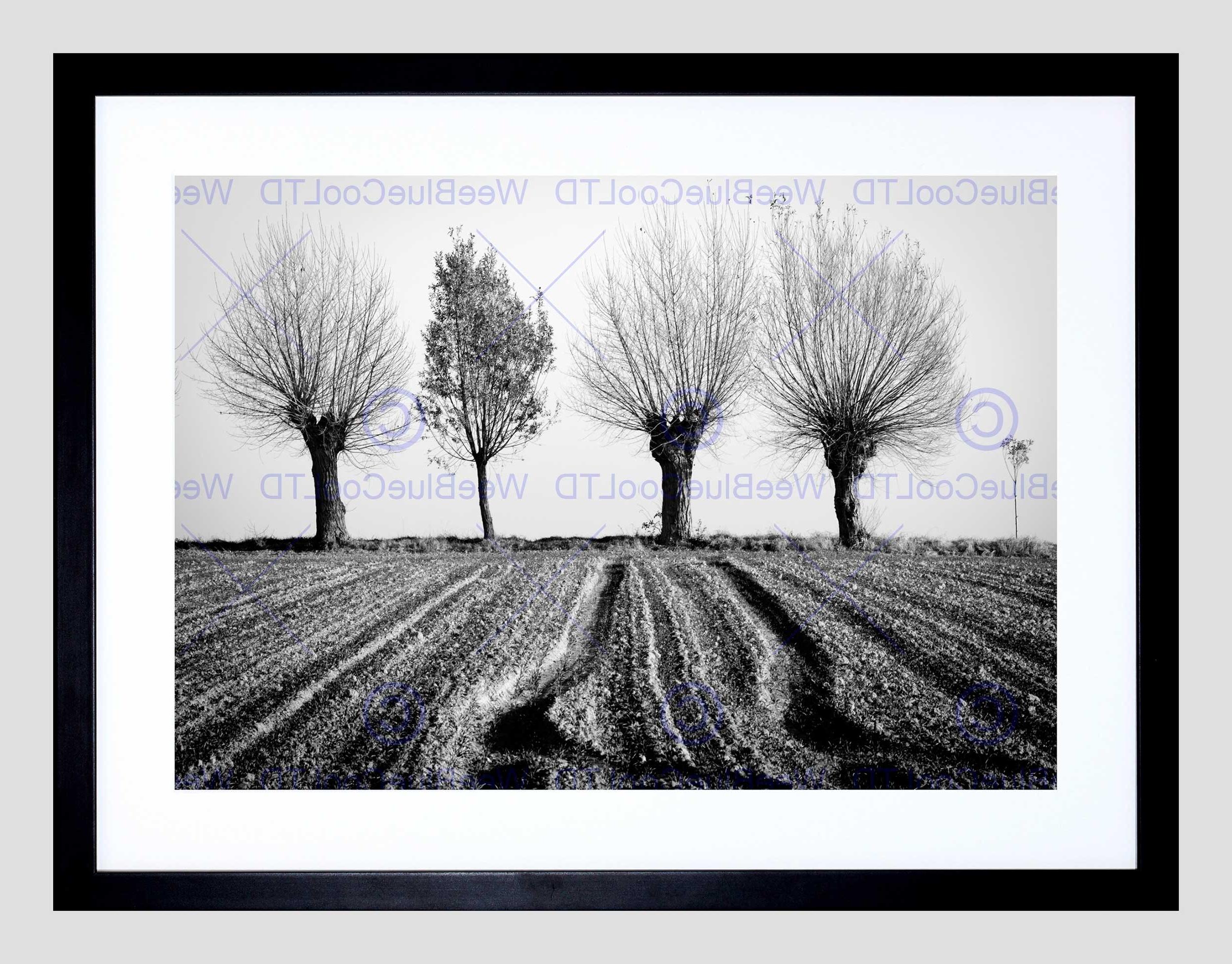 Well Liked Trees Horizon Black White Black Frame Framed Art Print Picture For Black Framed Art Prints (View 14 of 15)