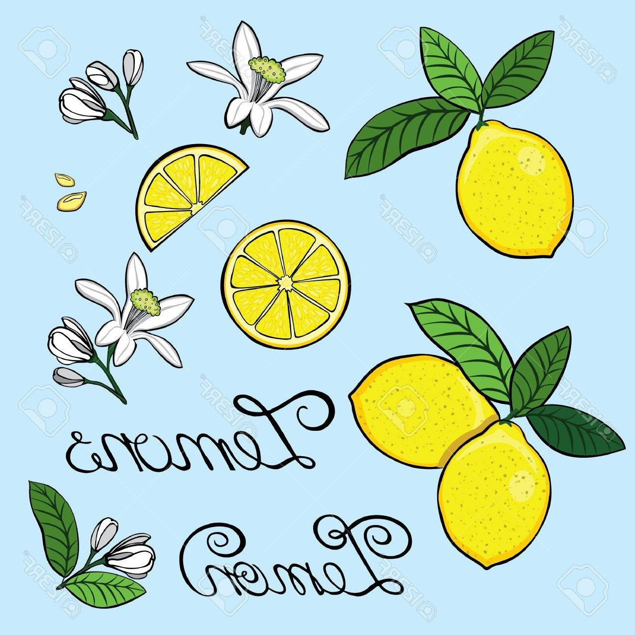 2018 Elements For The Design Of A Lemon, Lemon Tree Flowers, Grain With Regard To Lemon Wall Art (Gallery 4 of 20)