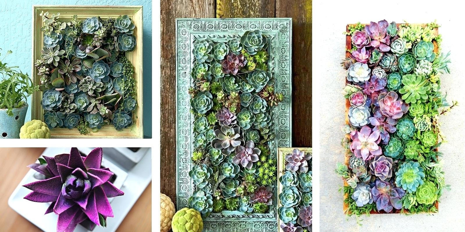 Best And Newest Succulent Wall Hanging Art Kit Decor Diy – Restorethelakes In Succulent Wall Art (View 14 of 20)