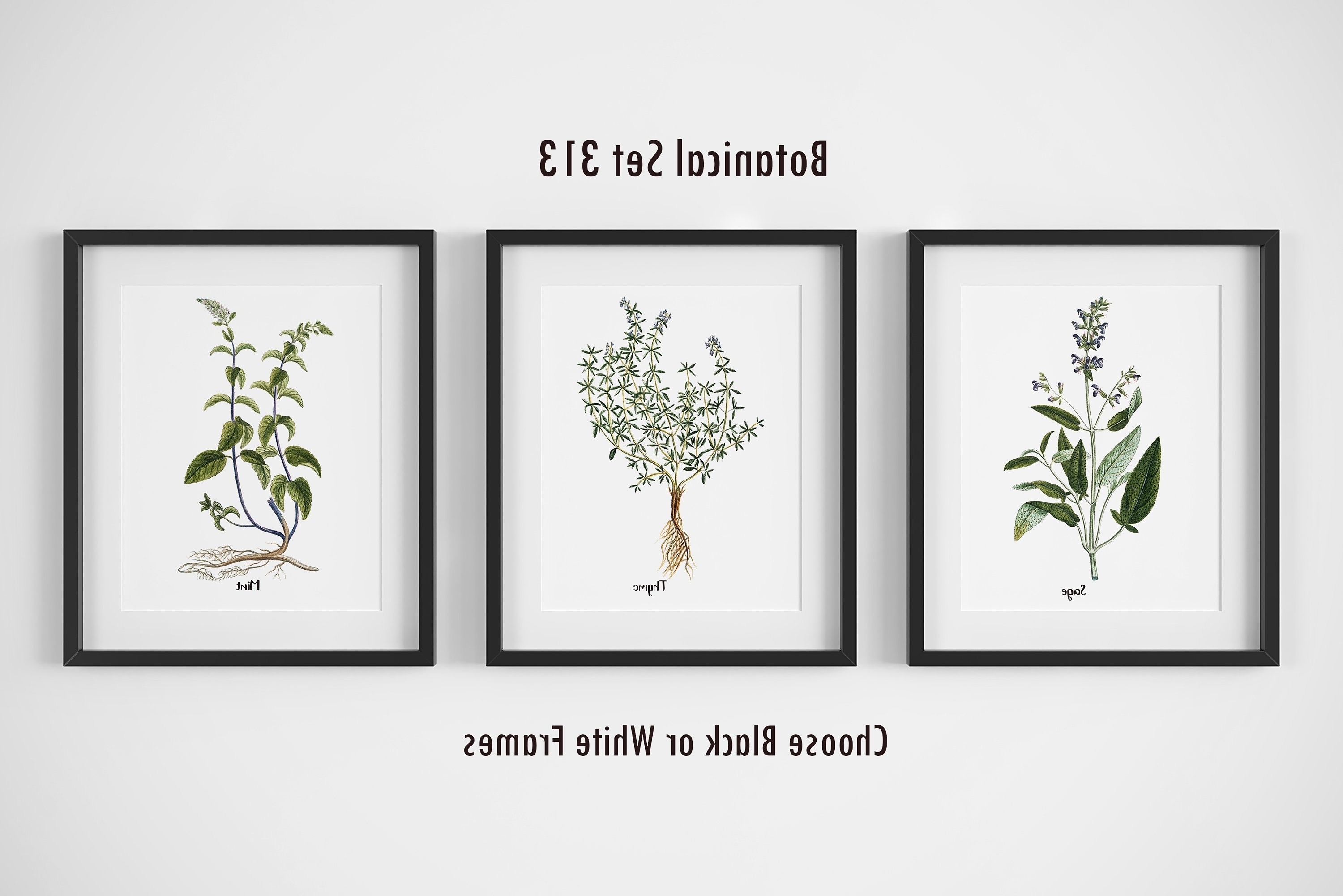 Botanical Prints, Set Of 3, Framed Wall Art, Farmhouse Wall Decor With Regard To Recent Herb Wall Art (View 2 of 20)