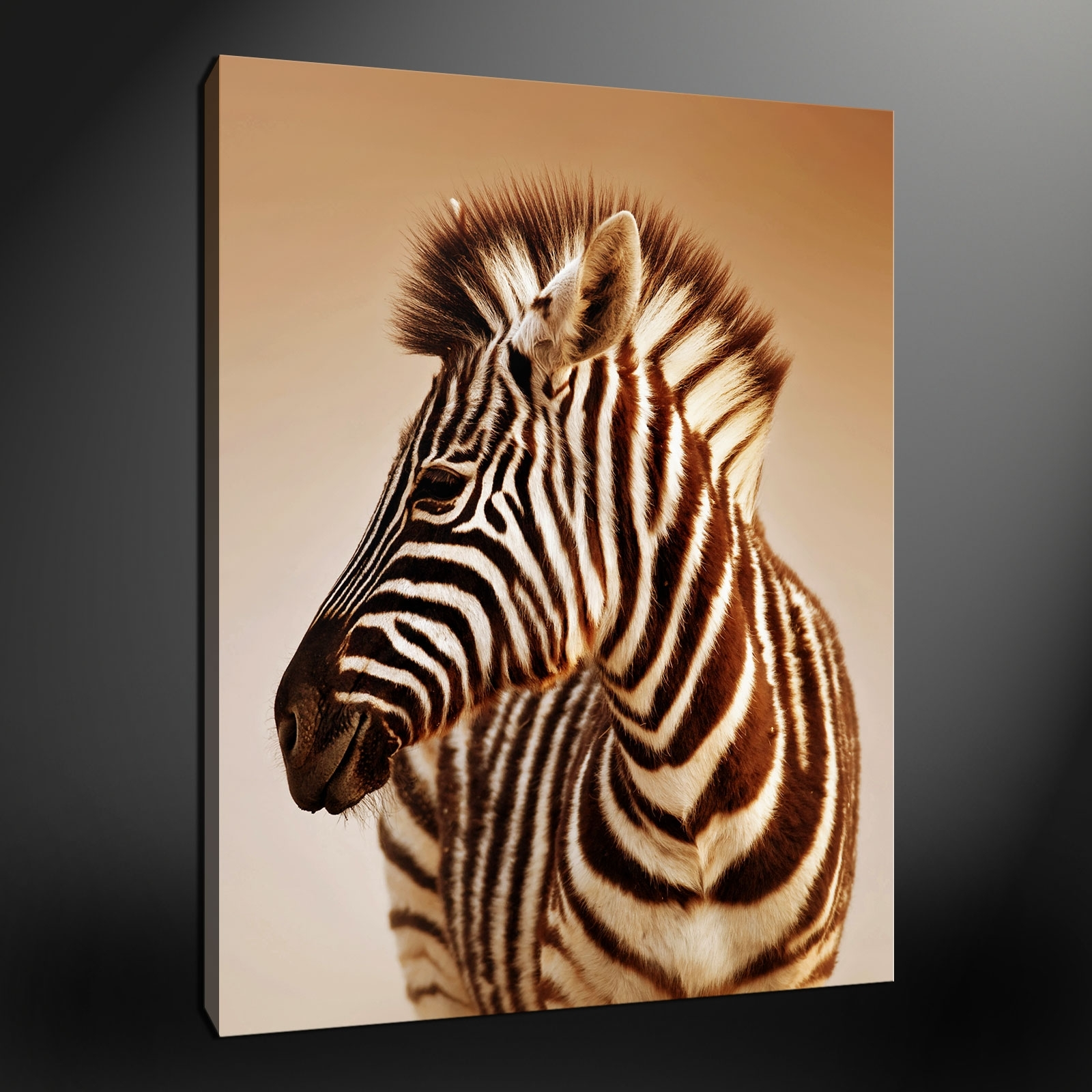 Featured Photo of Zebra Canvas Wall Art