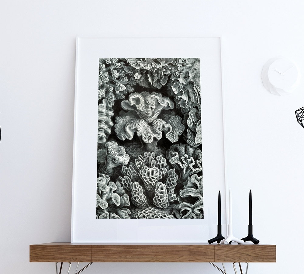 Coral Wall Art Within Latest Ernst Haeckel Hexacoralla Print Sea Coral Art Vintage Nautical Decor (View 7 of 20)