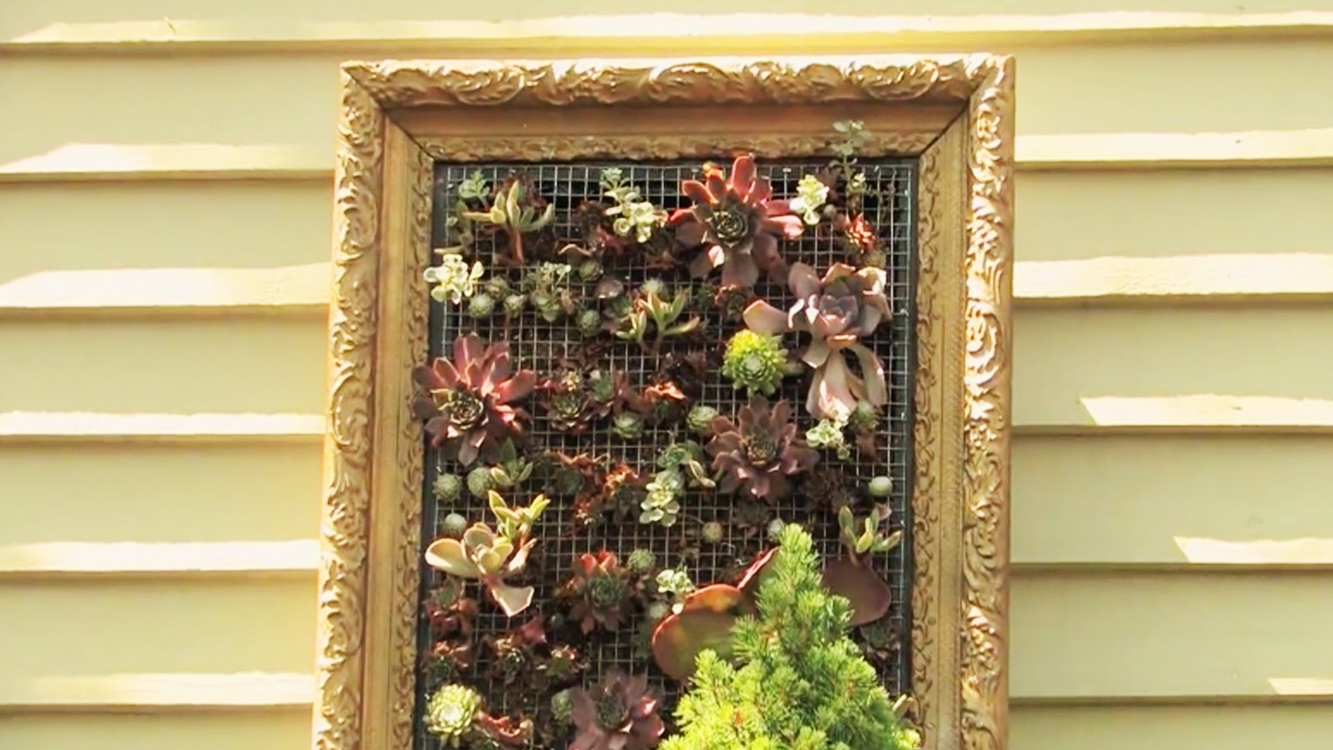 Creating Living Wall Art – Youtube Throughout Famous Living Wall Art (View 7 of 20)