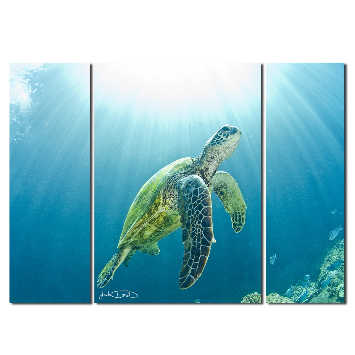 Ebay Pertaining To Trendy Sea Turtle Canvas Wall Art (View 4 of 20)