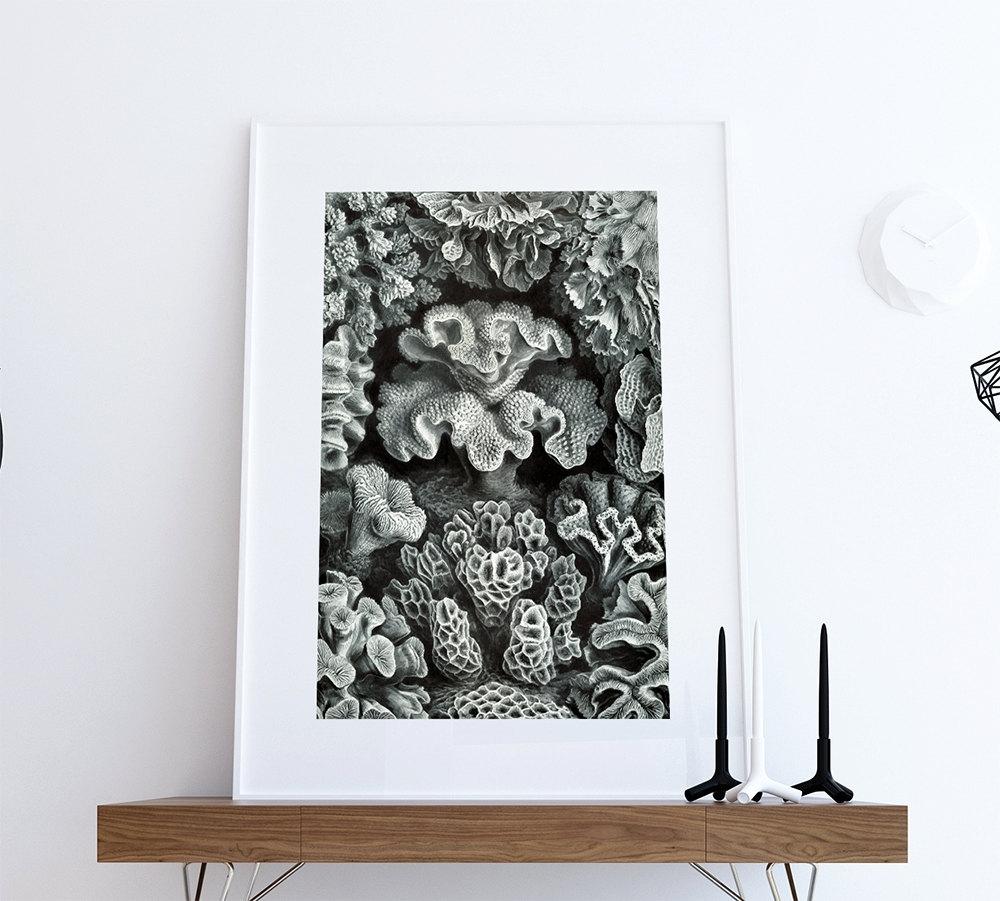 Ernst Haeckel Hexacoralla Print Sea Coral Art Vintage Nautical Decor Inside Fashionable Nautical Wall Art (View 13 of 15)