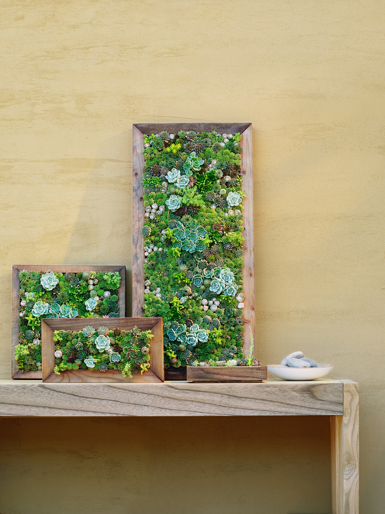 Famous How To Make Vertical Succulent Gardens – Sunset Magazine Pertaining To Living Wall Art (View 3 of 20)