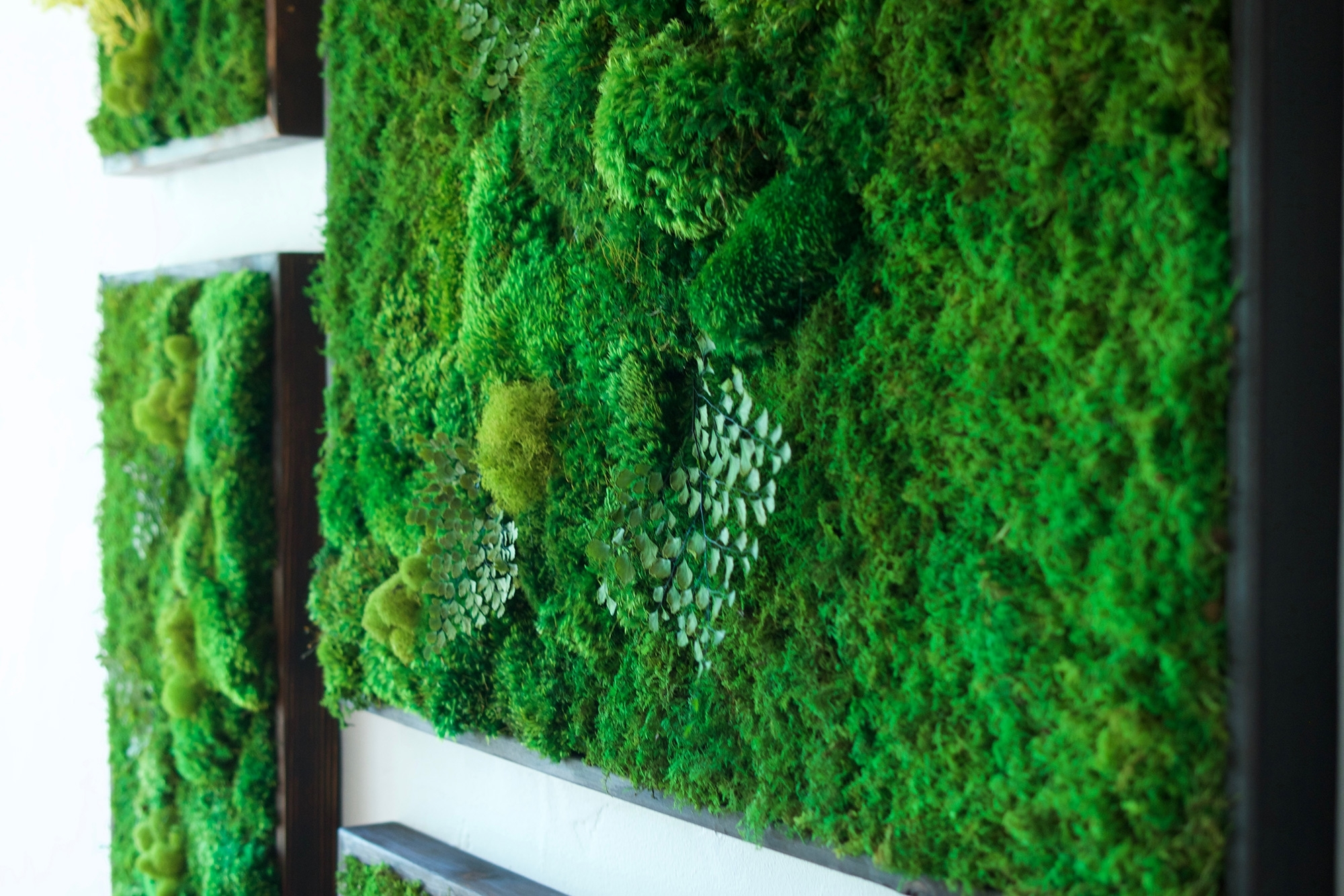 "Favorite 58X58"" Real Preserved Moss Wall Art Green Wall Collage No Sticks (View 15 of 20)"