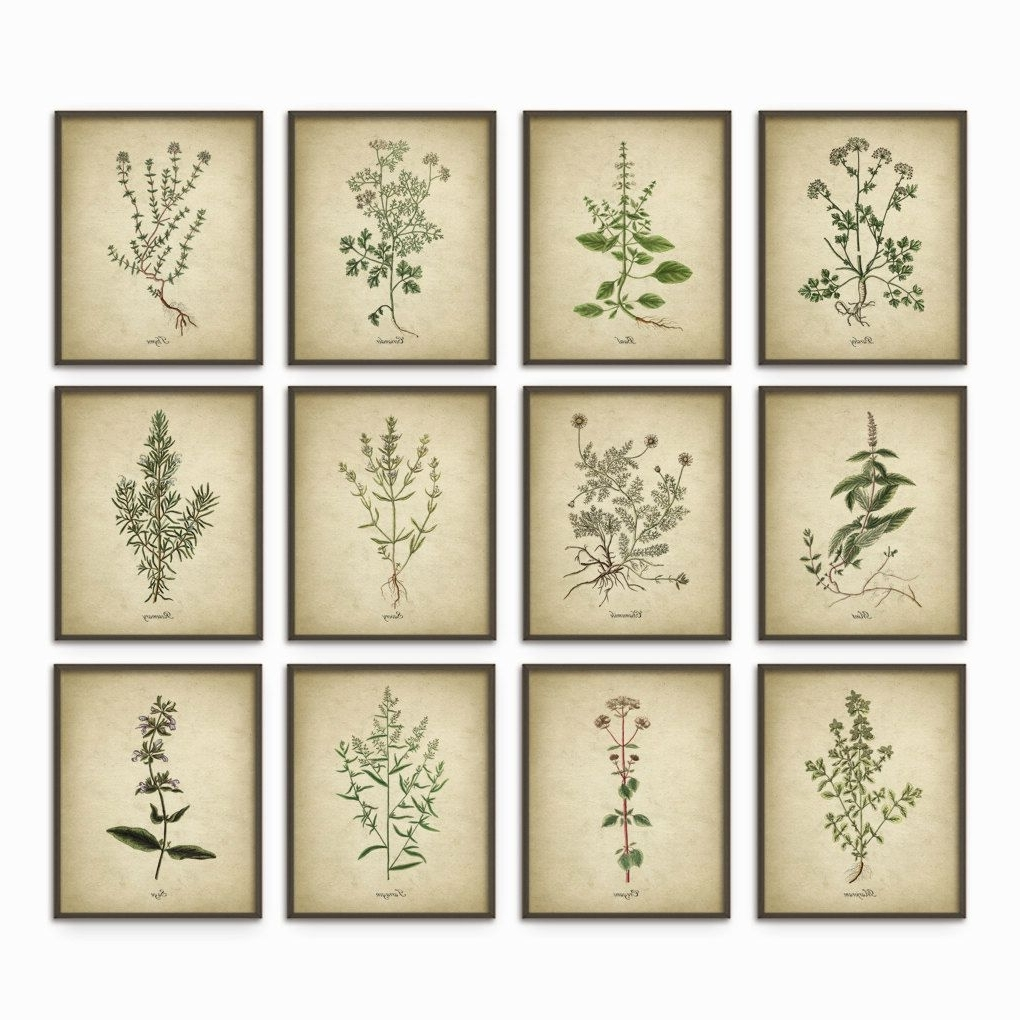 Herb Wall Art With Best And Newest Kitchen Herbs Wall Art Print Set Of 12 – Vintage Botanical Herb (View 11 of 20)