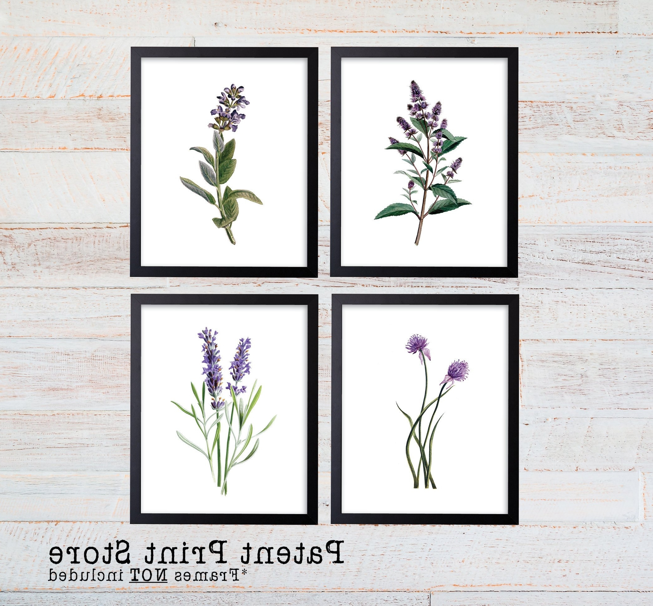 Herb Wall Art With Regard To Trendy Purple Herb Botanical Art Prints. Herb Prints (View 12 of 20)