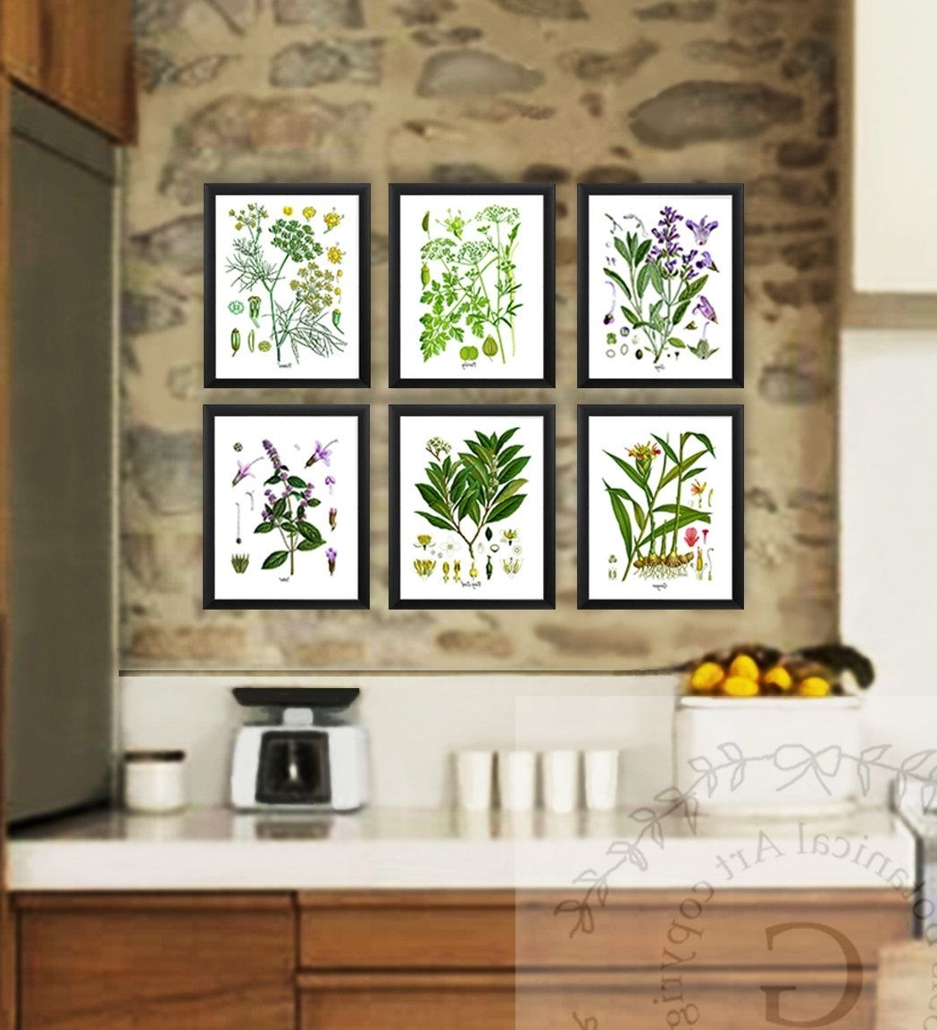 Kitchen Herb Botanical Prints Set Of 6 Kitchen Herbs Wall Art Within Popular Herb Wall Art (View 15 of 20)