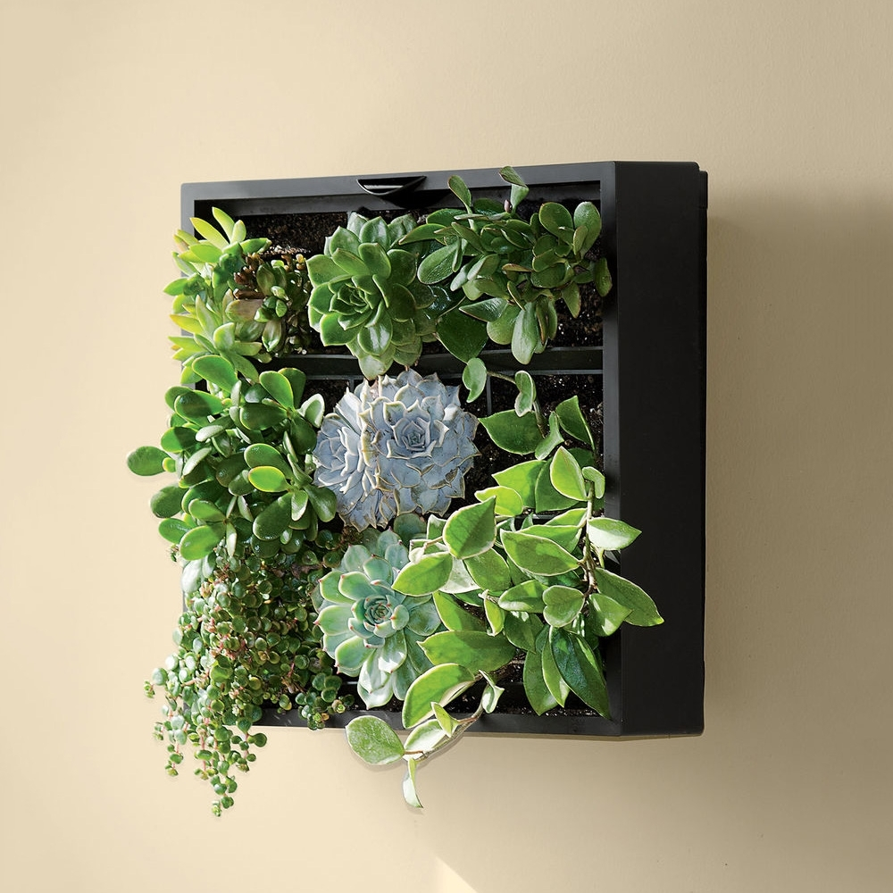 Living Art Green Wall / Tabletop Planter – The Green Head Intended For Most Up To Date Living Wall Art (View 6 of 20)