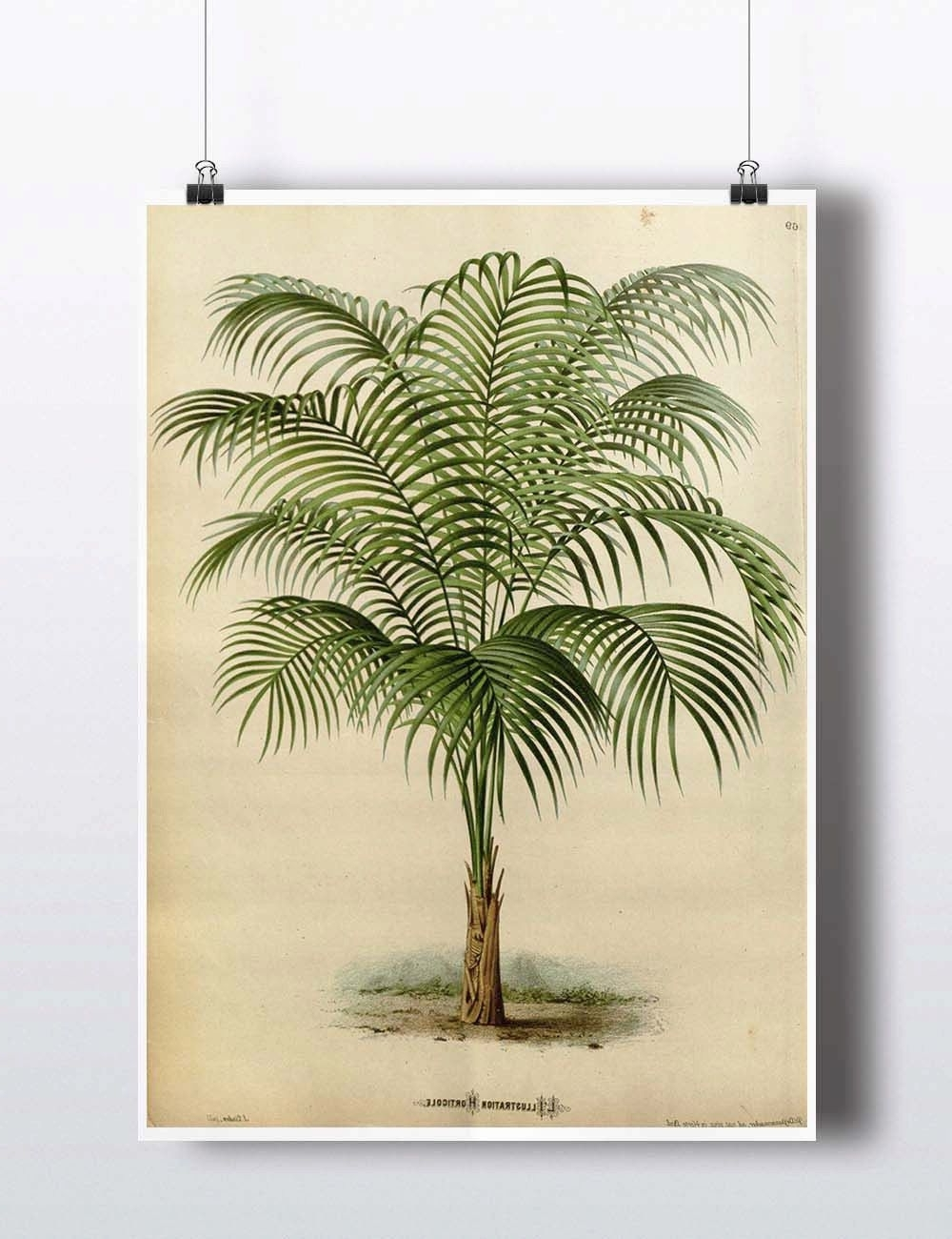 Most Recent Antique 1800S Palm Tree Print Art Print Poster Palm Tree Wall Decor For Palm Tree Wall Art (Gallery 18 of 20)