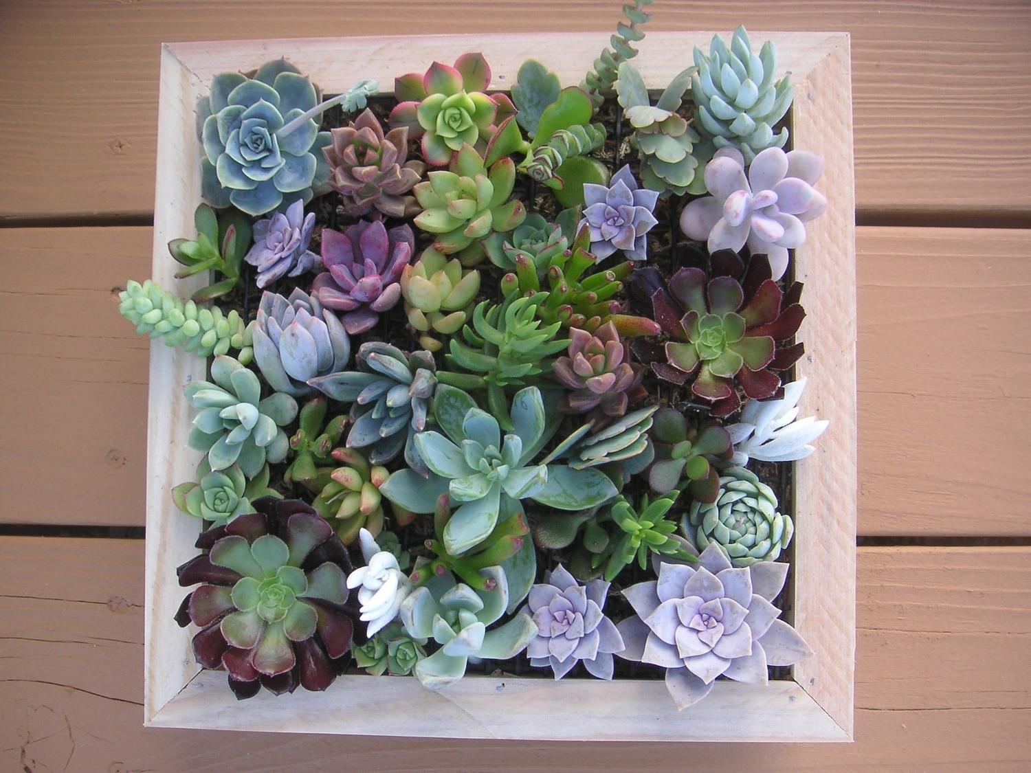 Most Recent Succulent Framed Wall Art – Elitflat Throughout Succulent Wall Art (View 3 of 20)