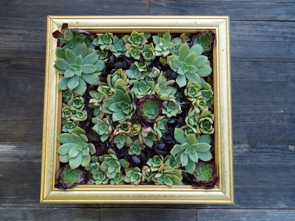 Most Recent Succulent Wall Art: 9 Steps (with Pictures) Regarding Living Wall Art (View 17 of 20)