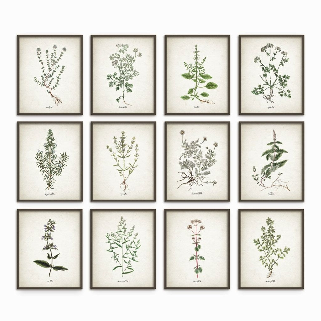 Most Up To Date Kitchen Herbs Wall Art Print Set Of 12 – Vintage Botanical Herb Regarding Herb Wall Art (View 17 of 20)