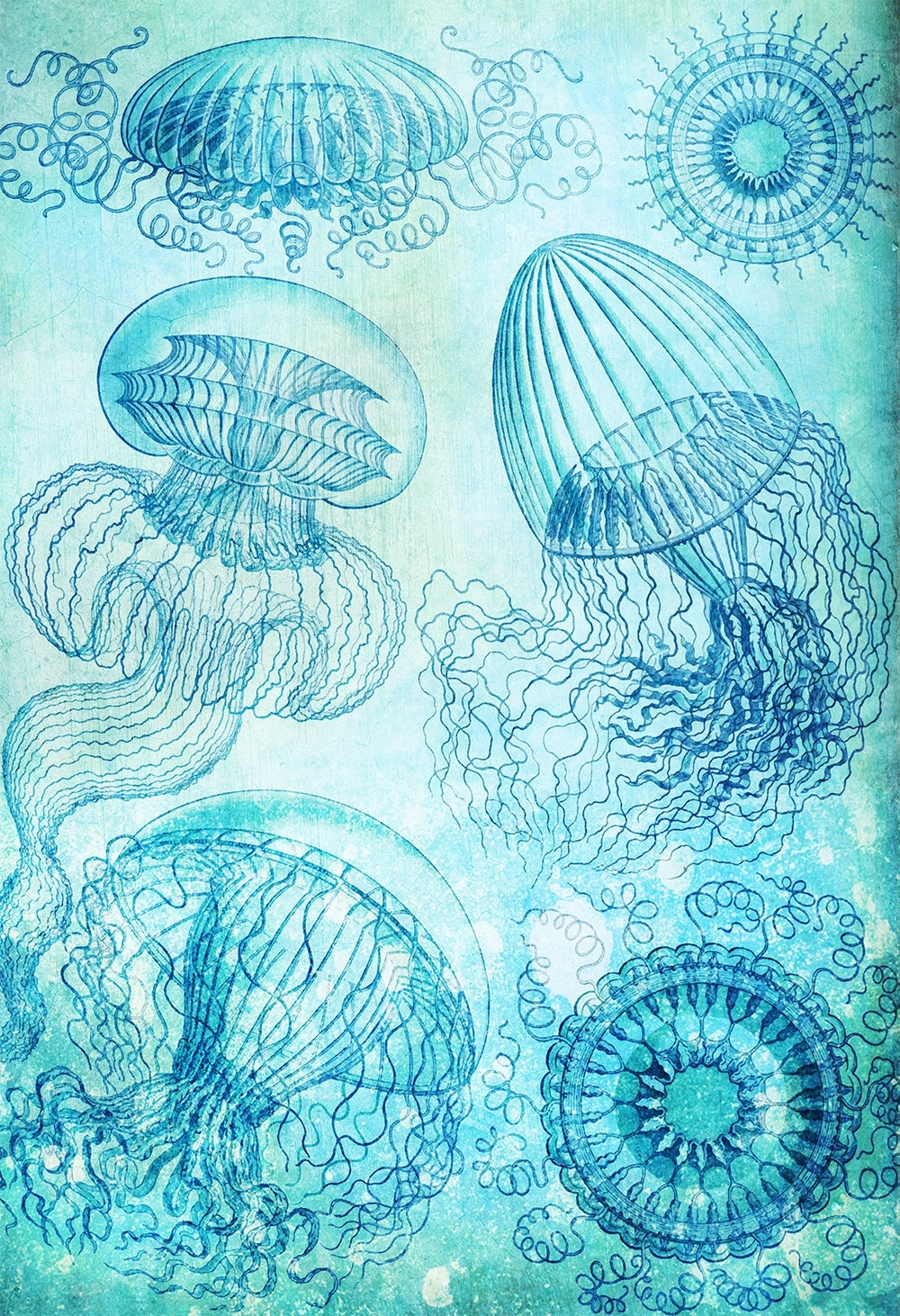 Ocean Wall Art Throughout Trendy Ernst Haeckel Leptomedusae Print Jelly Fish Art Vintage Nautical (View 20 of 20)
