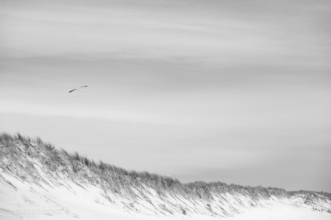 Photo Print Of Southampton Long Island Beach Dunes Seagull Black And Throughout Most Up To Date Long Island Wall Art (View 16 of 20)