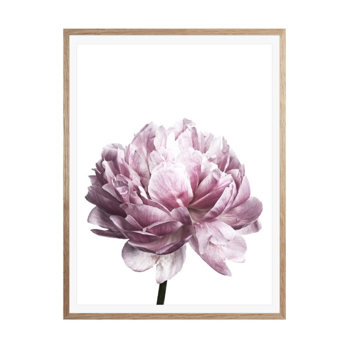 Recent Flower Wall Art Throughout Peony Flower Wall Art Canvas Painting Picture Home Decor Mural Frame (View 20 of 20)