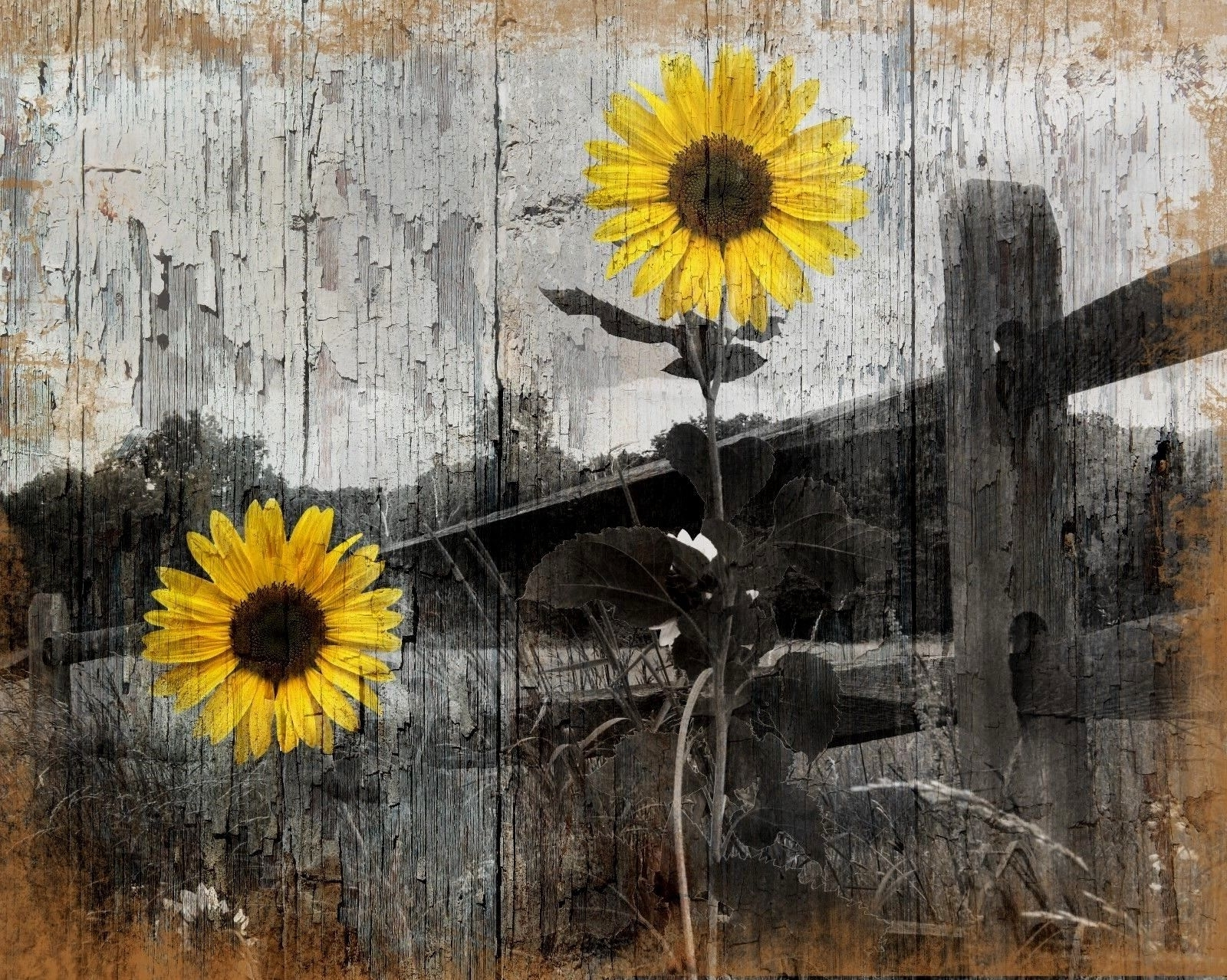 Rustic Sunflower Country/farmhouse Home Wall Art Decor Matted In Trendy Sunflower Wall Art (View 8 of 20)