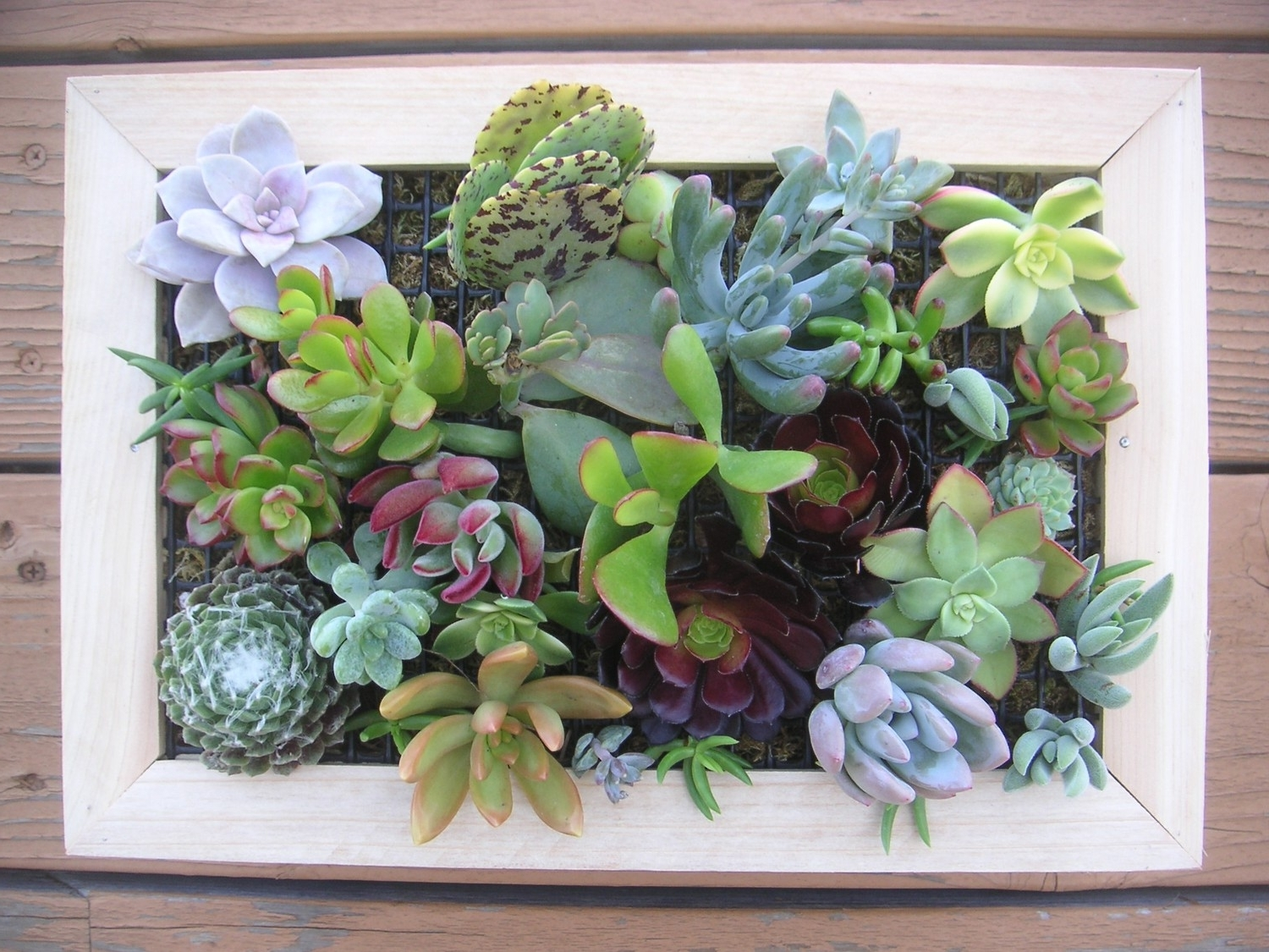 Succulent Wall Art Pertaining To Famous 97 Living Wall Art Succulents An Old Picture Frame In Living Wall (View 7 of 20)
