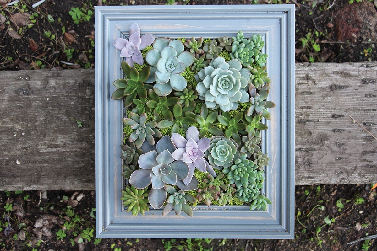 Succulent Wall Art Pertaining To Favorite Diy A Framed Succulent Wall Planter – Do It Yourself Projects – Lonny (View 5 of 20)