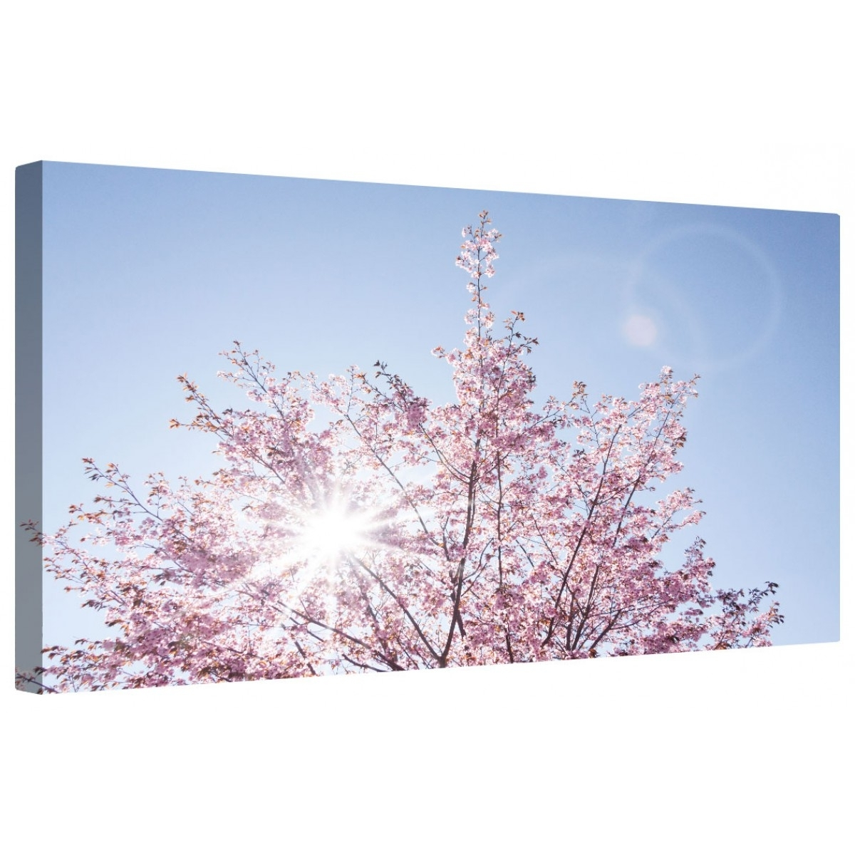 Sunlit Cherry Blossom Framed Canvas Wall Art Picture (View 16 of 20)