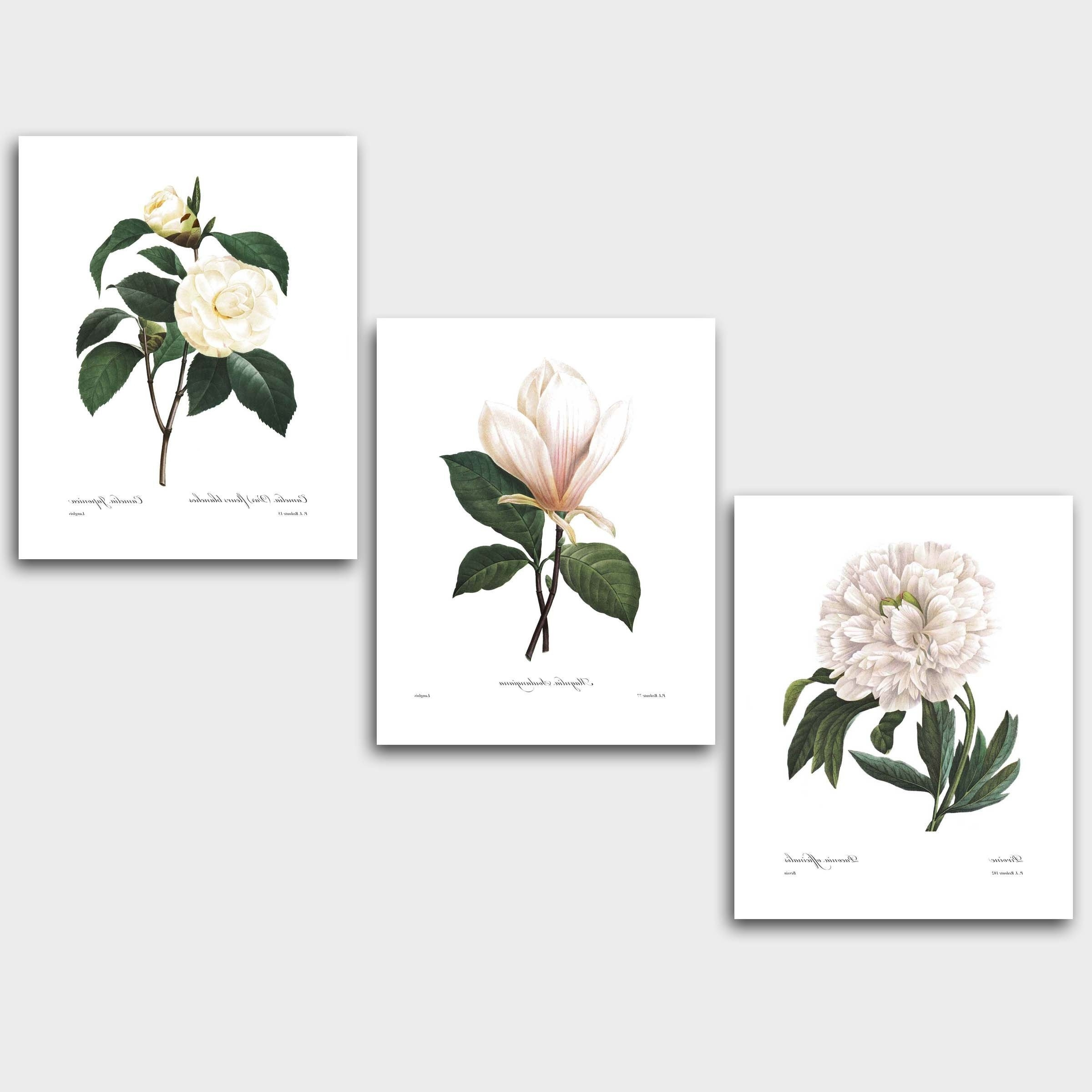 Trendy Flower Wall Art Within Set Of 3 Botanical Prints, White Decor (redoute Flower Wall Art (View 17 of 20)
