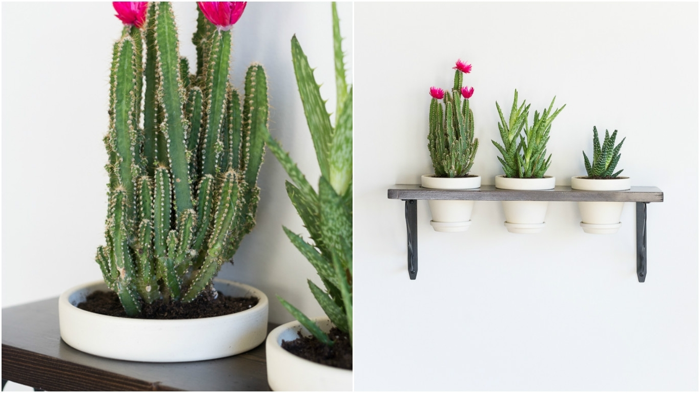 Turn Plants Into Wall Art With This Diy Hanging Succulent Garden With Best And Newest Succulent Wall Art (View 8 of 20)