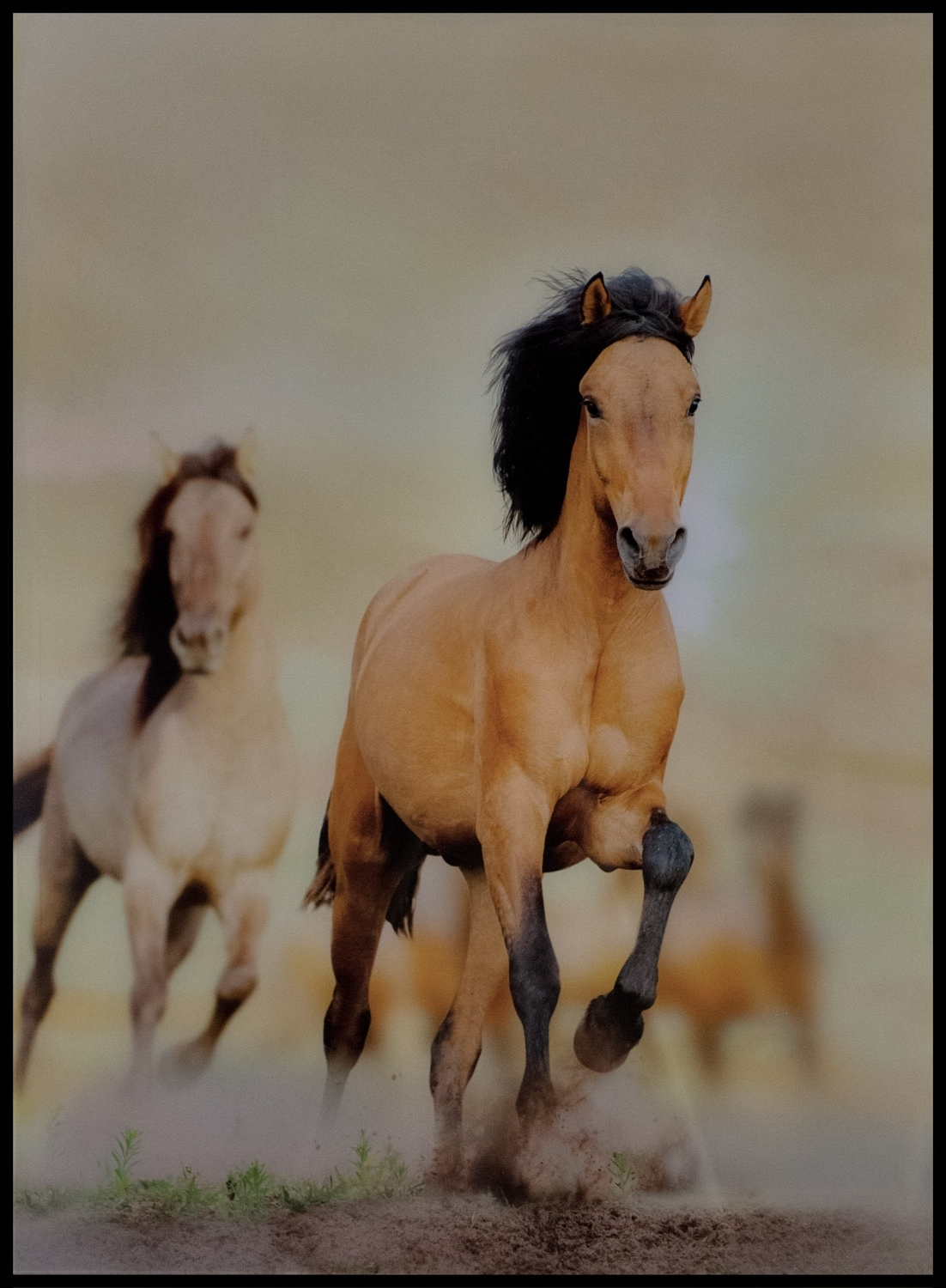 Well Known Horses Wall Art Within Galloping Horses Wall Art – Casanad (View 19 of 20)