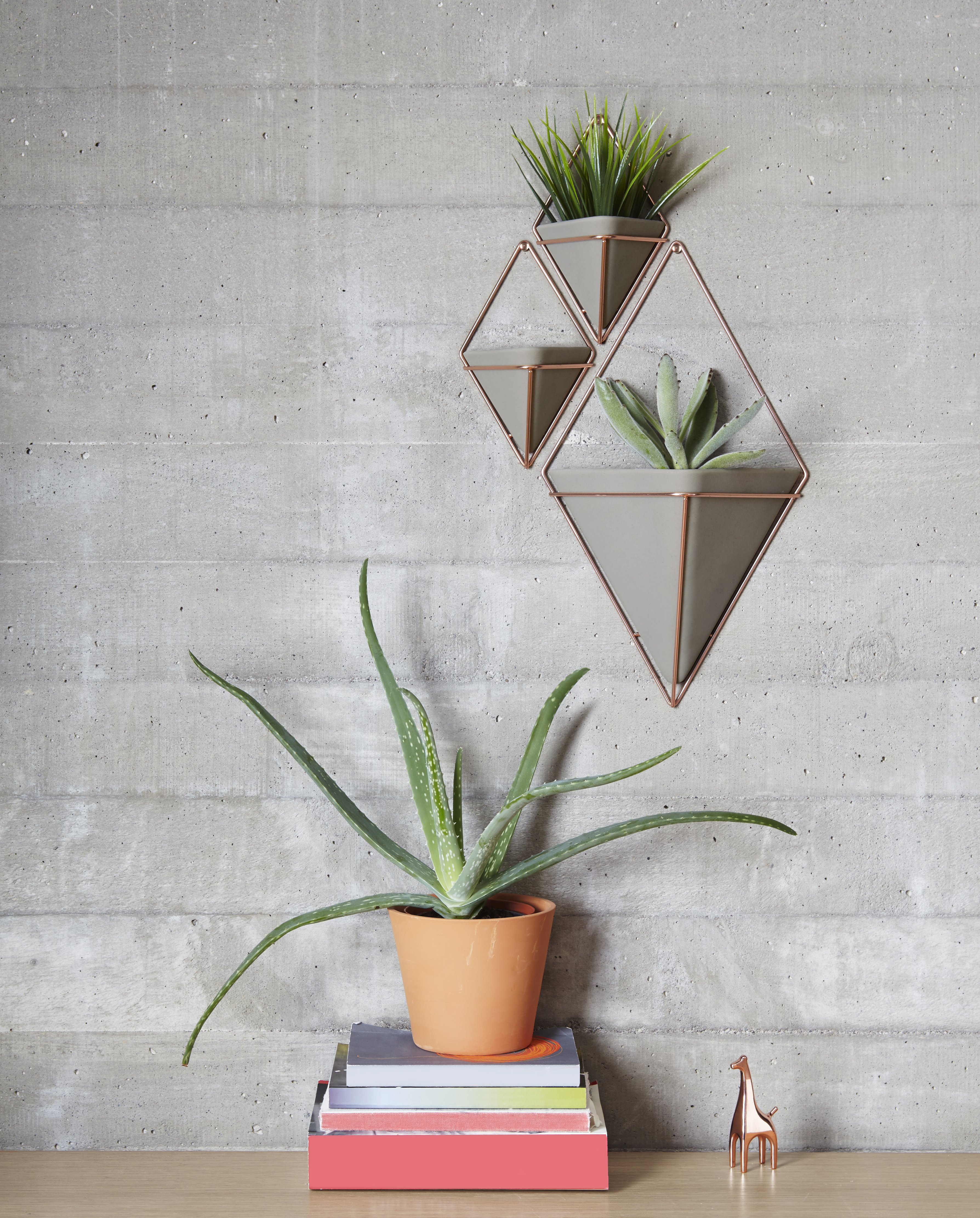 2 Piece Trigg Wall Decor Sets (Set Of 2) Throughout Latest Umbra Trigg Hanging Planter Vase & Geometric Wall Decor Container (Gallery 7 of 20)