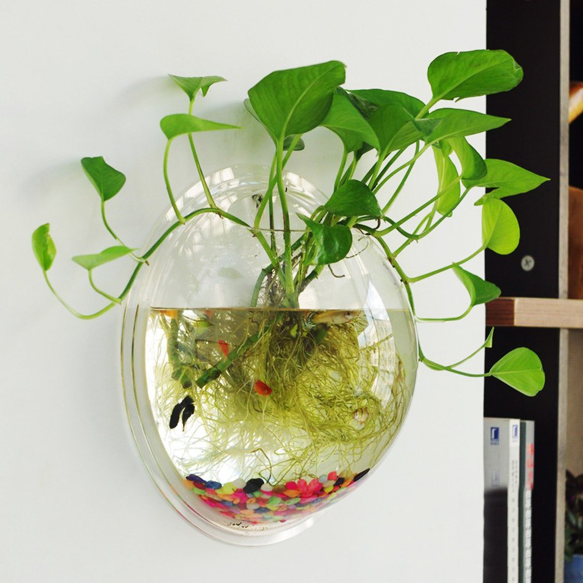 Most Current Amazon : Saim Aquarium Flower Plant Vase Home Wall Decor Clear With Vase And Bowl Wall Decor (Gallery 12 of 20)