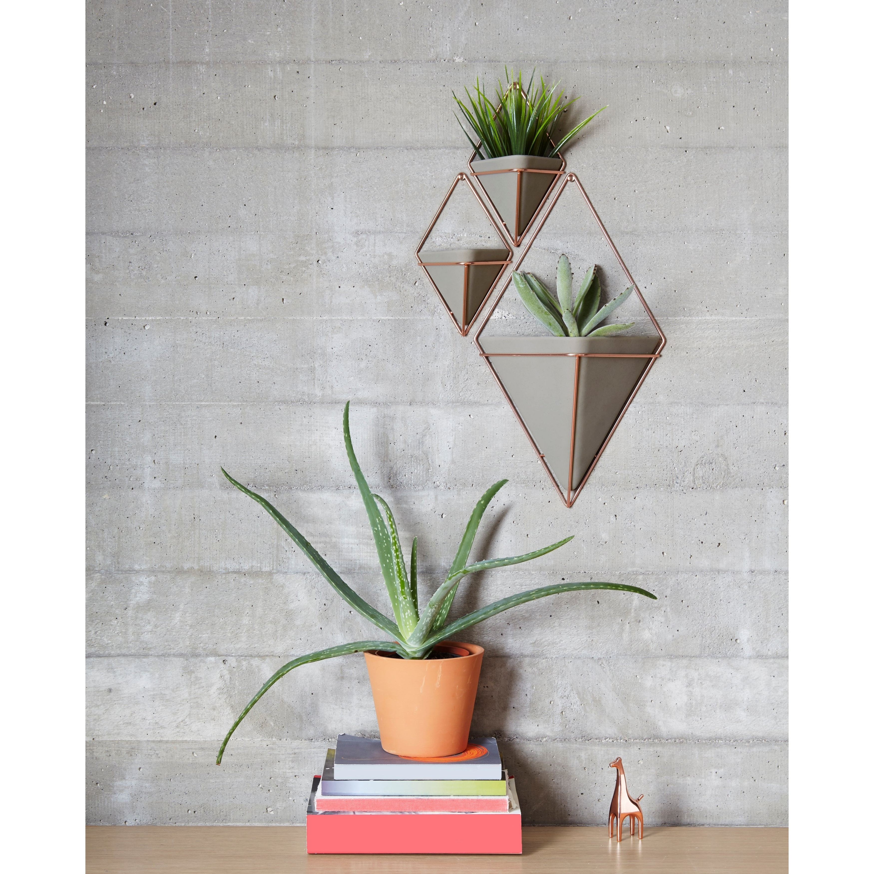 Preferred Shop Umbra Trigg Hanging Planter & Wall Decor (Set Of 2) – Free In Trigg Ceramic Planter Wall Decor (View 10 of 20)