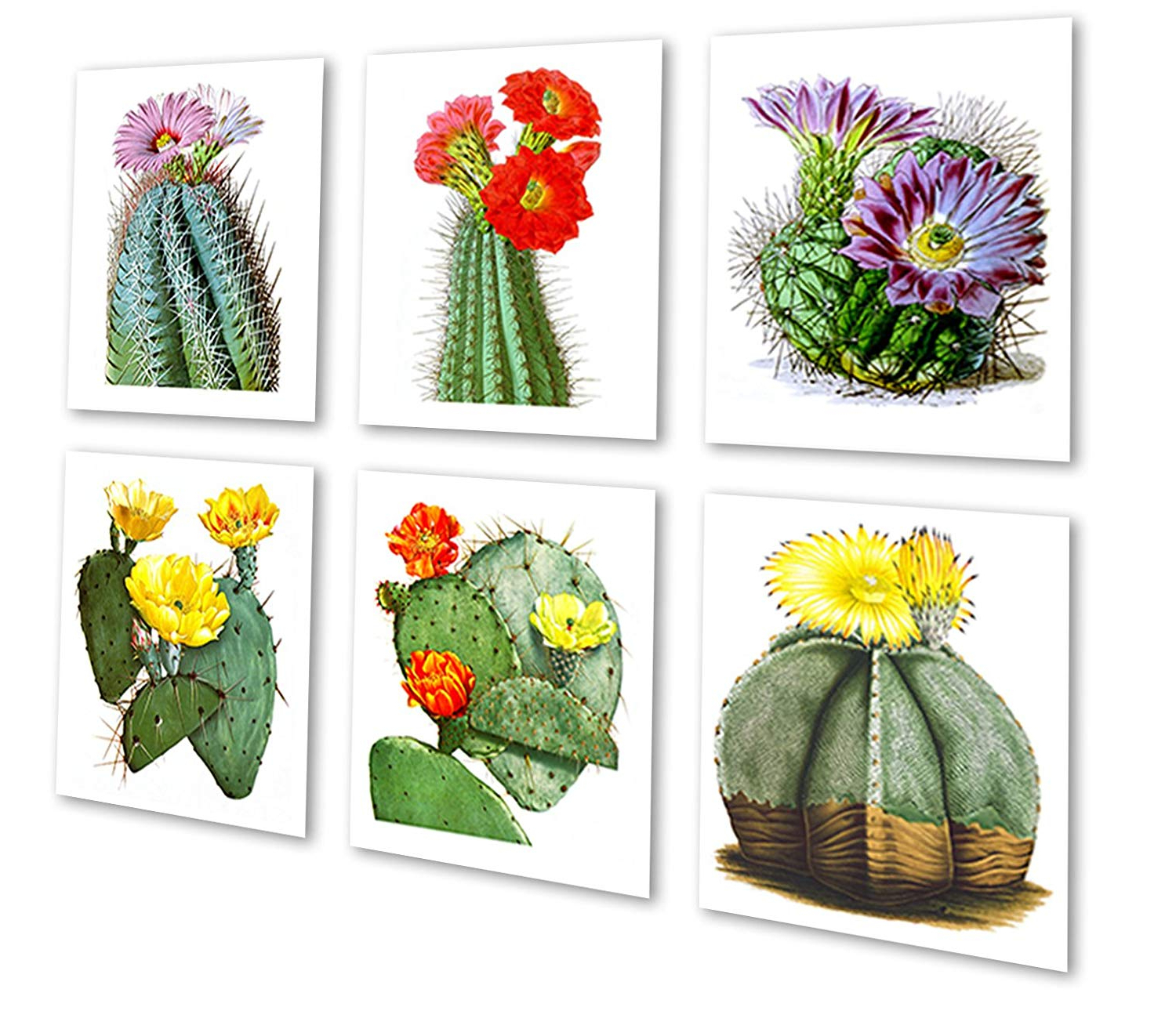 Recent 3 Piece Ceramic Flowers Wall Decor Sets Inside Amazon: Cactus Flowers Southwestern Decor Set Of 6 Unframed (Gallery 9 of 20)