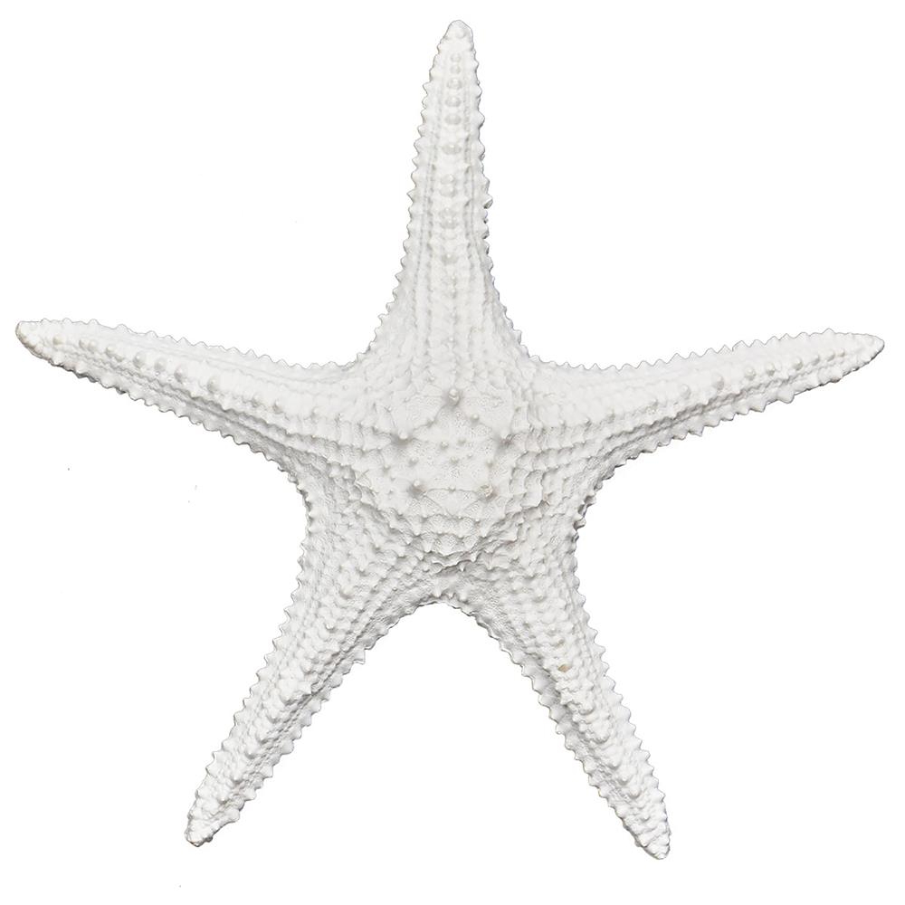 Best And Newest Wall Decor Book Name: Fetco – Goingdecor With Regard To Yelton 3 Piece Starfish Wall Decor Sets (View 18 of 20)