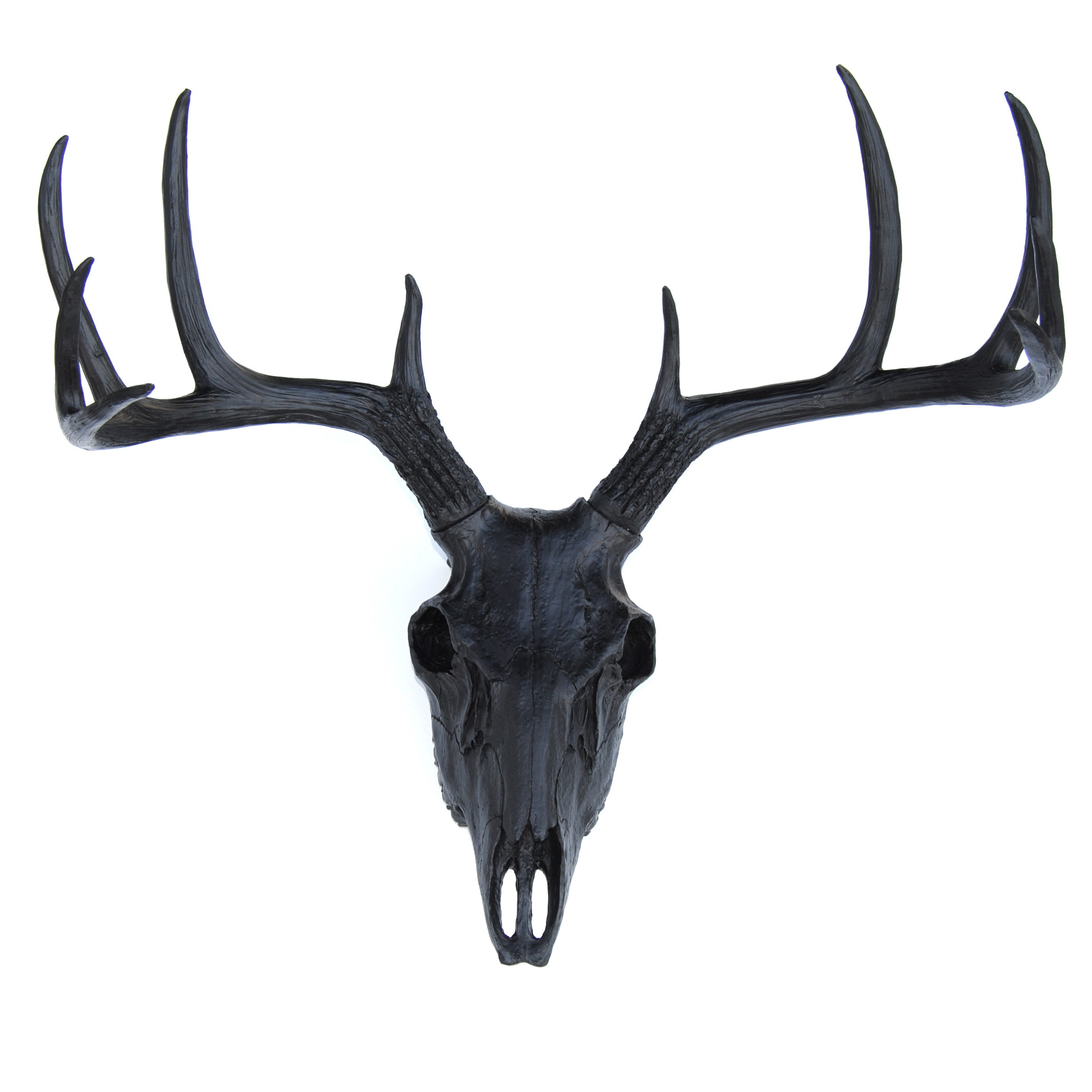 Faux Taxidermy Buck Skull Wall Décor & Reviews (View 11 of 20)