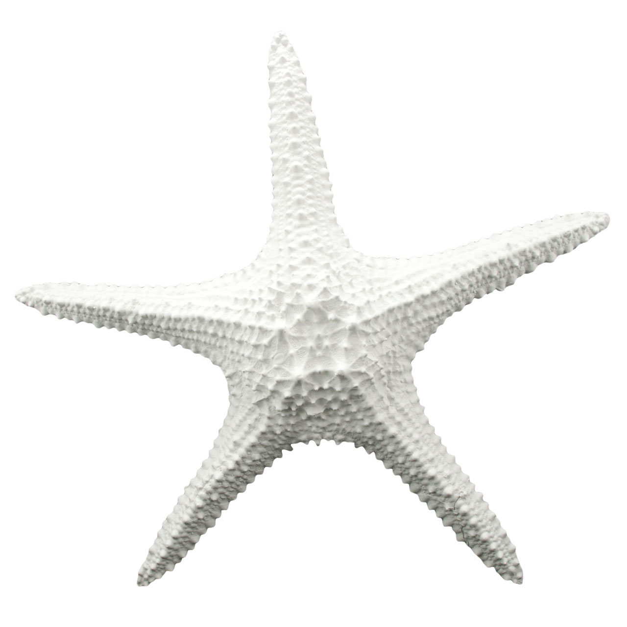 Newest Starfish Wall Décor & Reviews (View 6 of 20)
