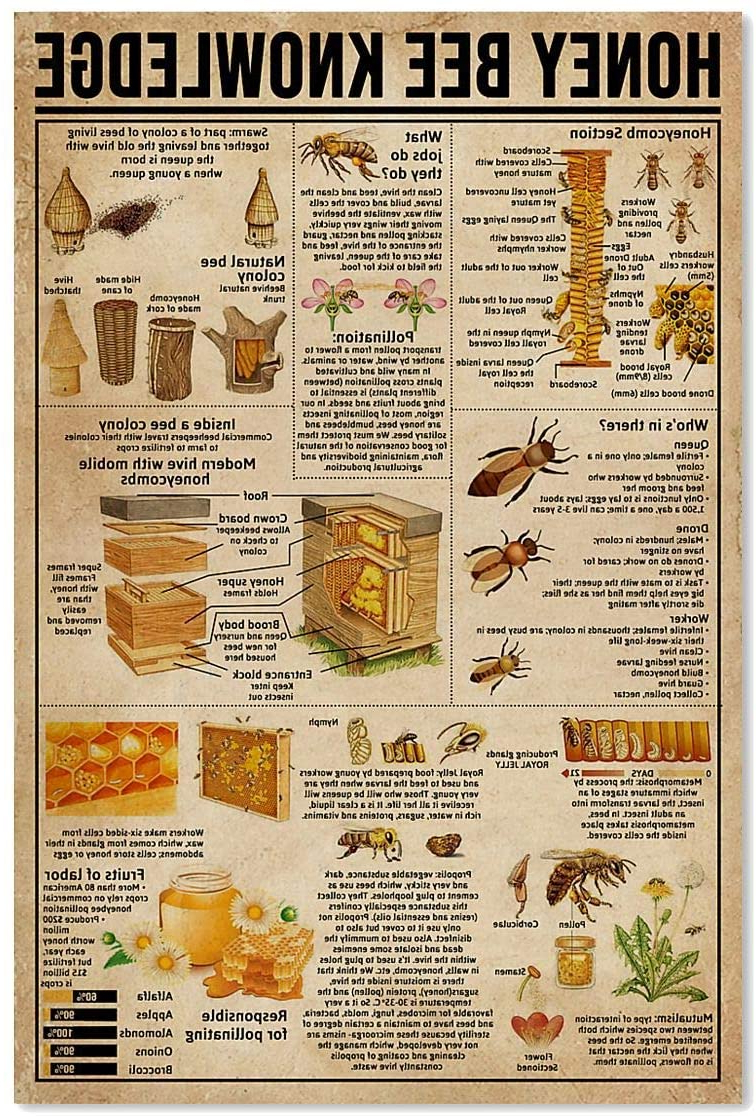 2019 Amazon: Prelove Honey Bee Knowledge Society Life Throughout This Is My Happy Place Sectioned Wall Decor (View 11 of 20)