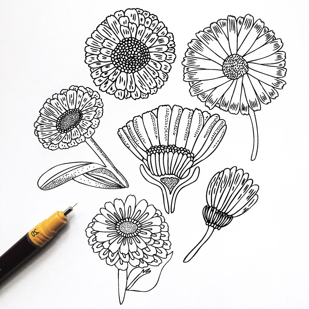 2019 Calendulas Black And White Sketch Using Rotring Rapidograph Regarding Antonin Wall Décor By One Allium Way (View 20 of 20)