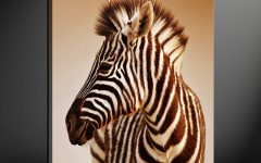 Zebra Canvas Wall Art