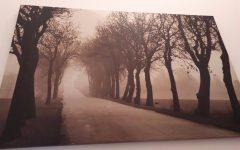 Gumtree Canvas Wall Art