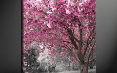 Pink Canvas Wall Art
