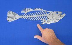 Fish Bone Wall Art